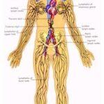 Los mejores especialistas en Drenaje linfático